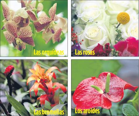 Exu00f3ticas Flores En Quito Ultimas Noticias